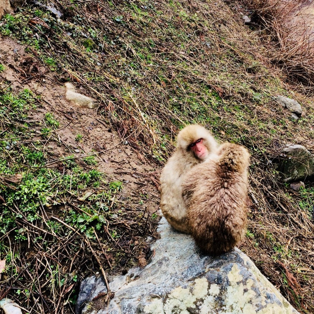 Snow Monkeys_180426_0118