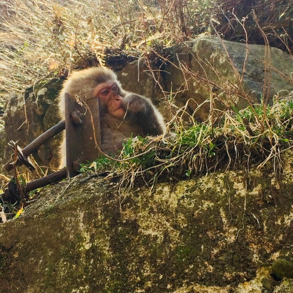 Snow Monkeys_180426_0130