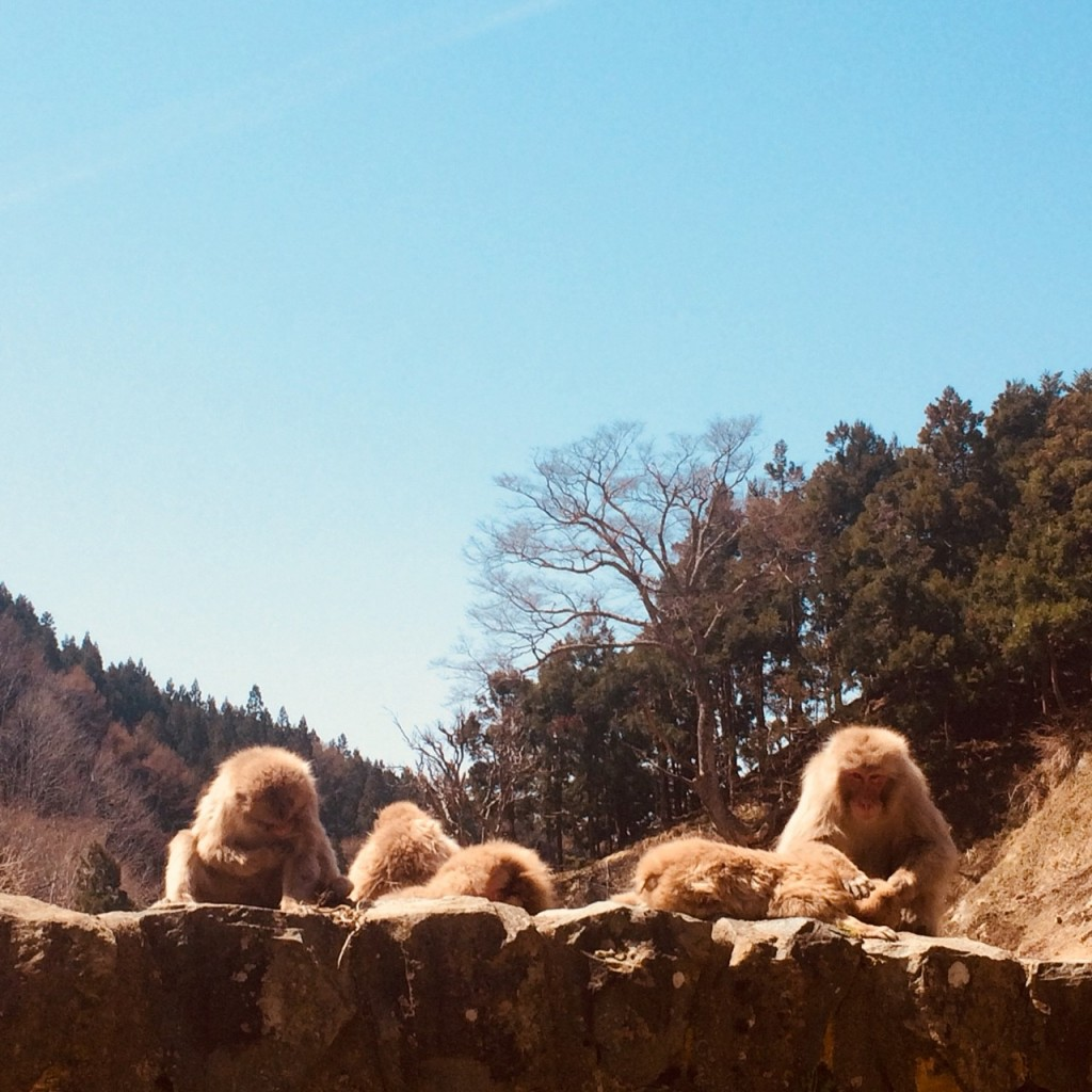 Snow Monkeys_180426_0143