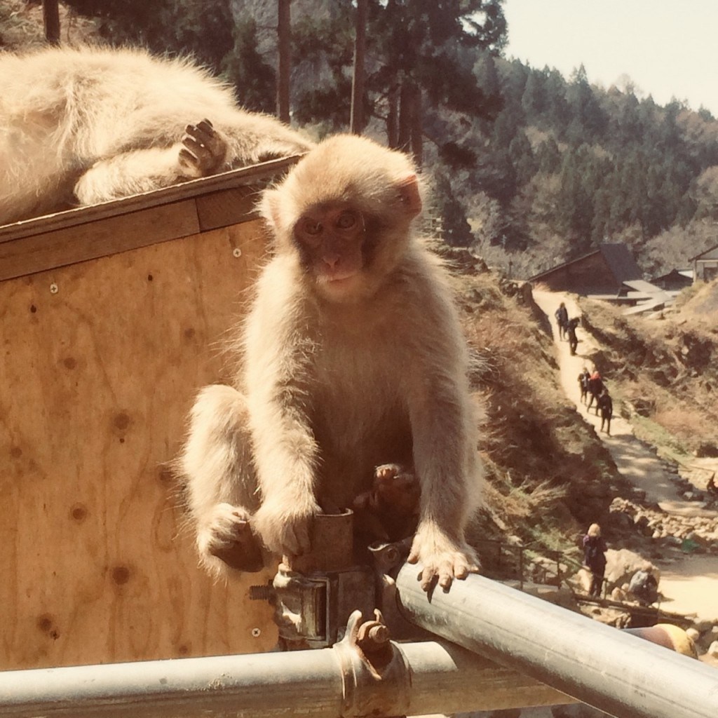 Snow Monkeys_180426_0149