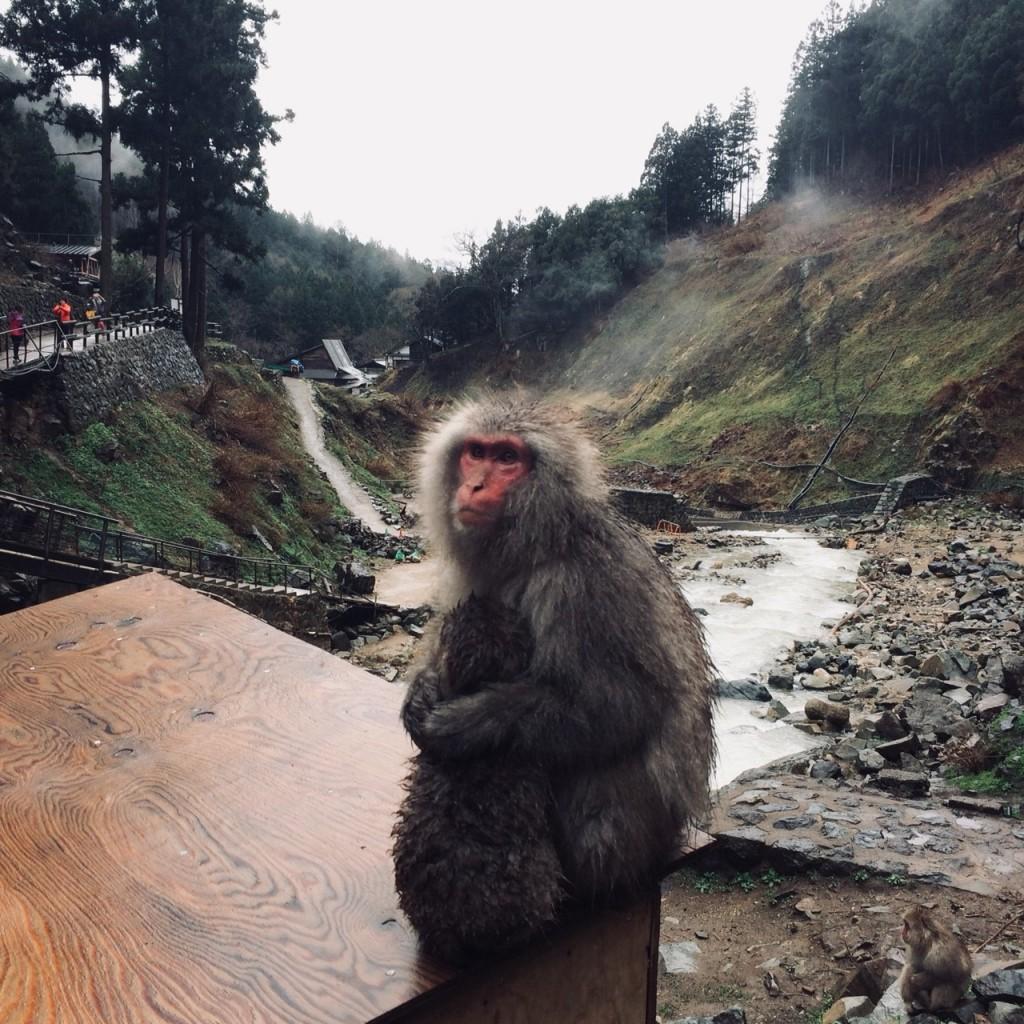 Snow Monkeys_180426_0153