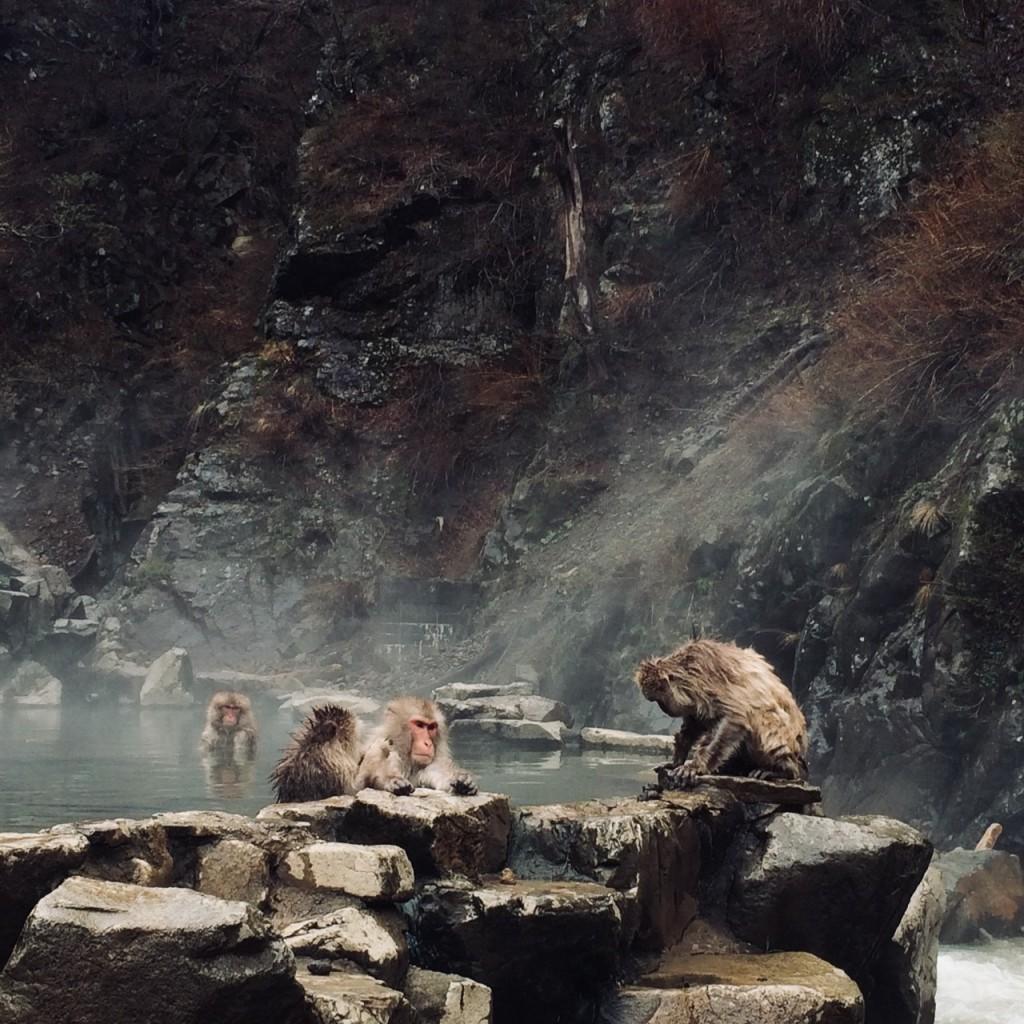 Snow Monkeys_180426_0158