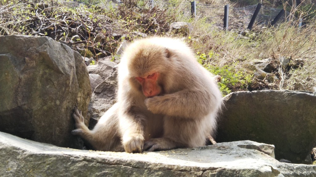 Snow Monkeys: Favourite Food & Daily Diet