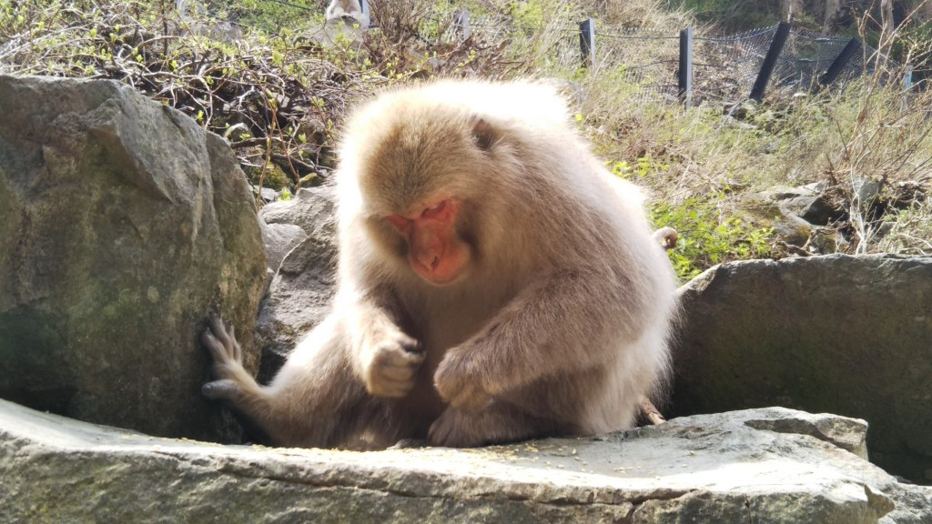 Snow Monkeys_180426_0160
