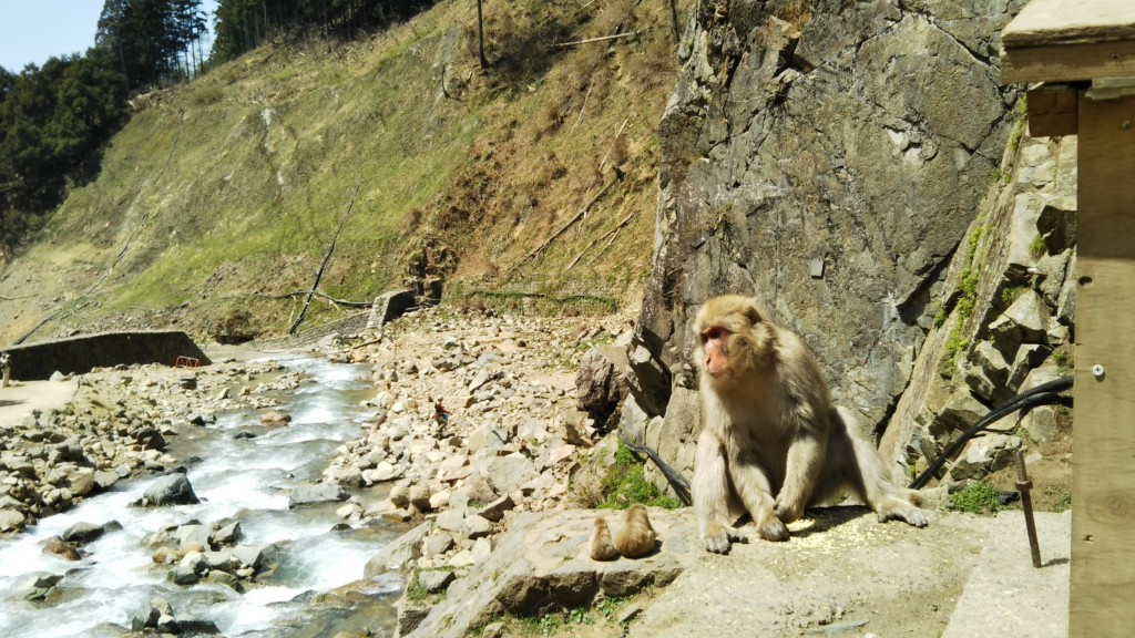 Snow Monkeys_180426_0161
