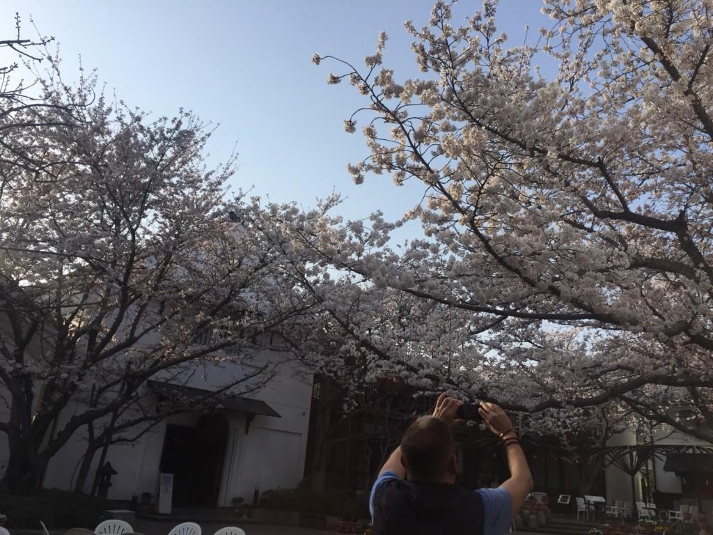 sakura at nagano