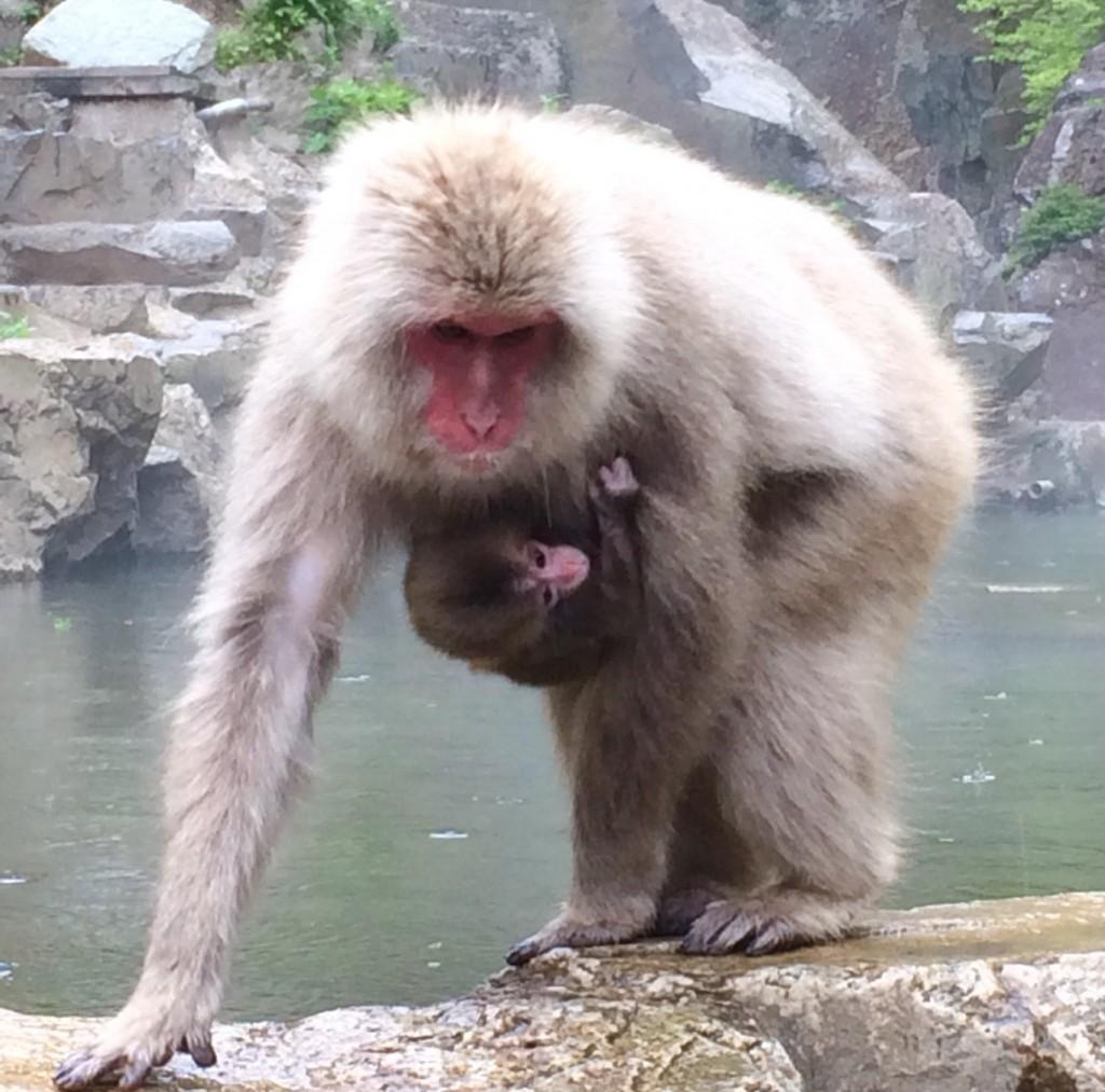 Snow Monkeys_180509_0188