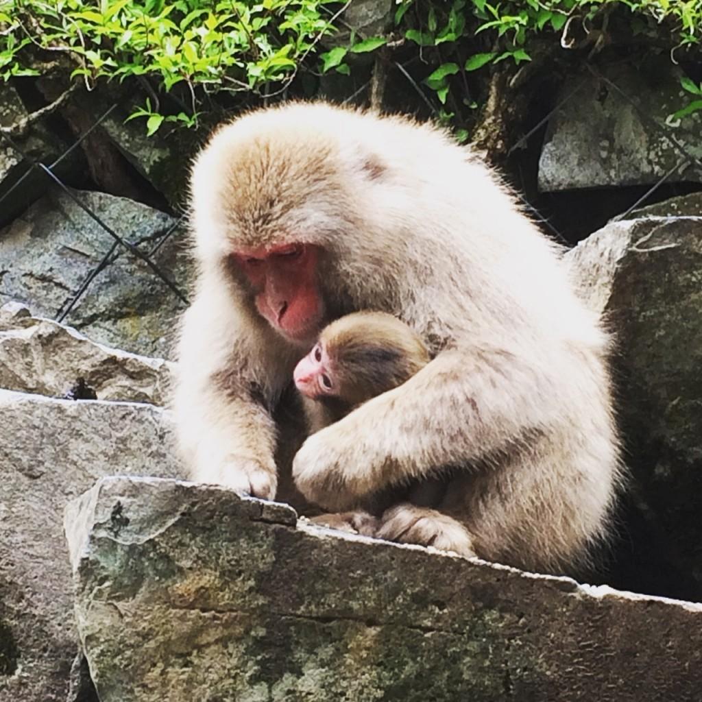 Snow Monkeys_180509_0190