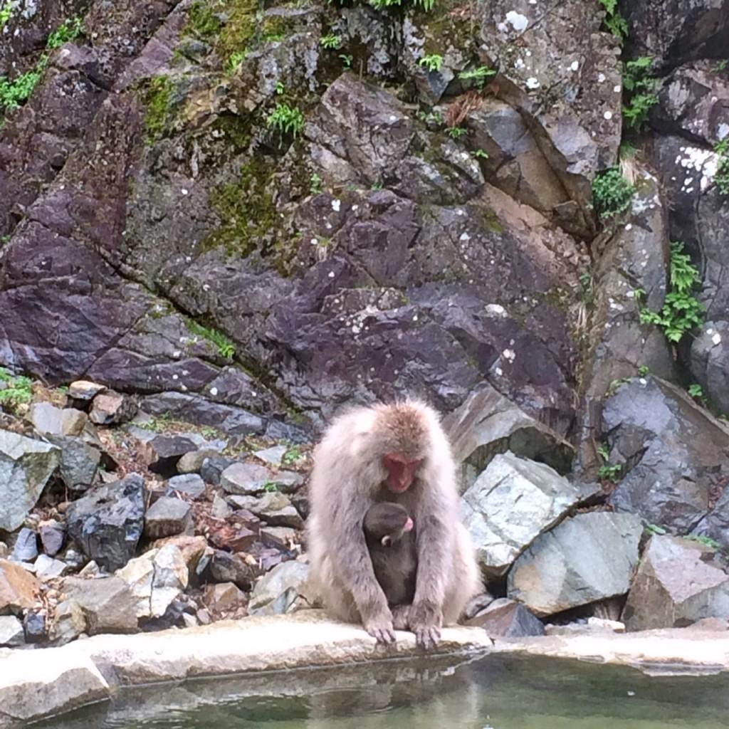 Snow Monkeys_180509_0203