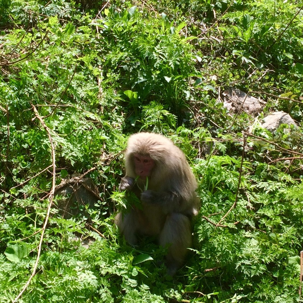 Snow Monkeys_180521_0167