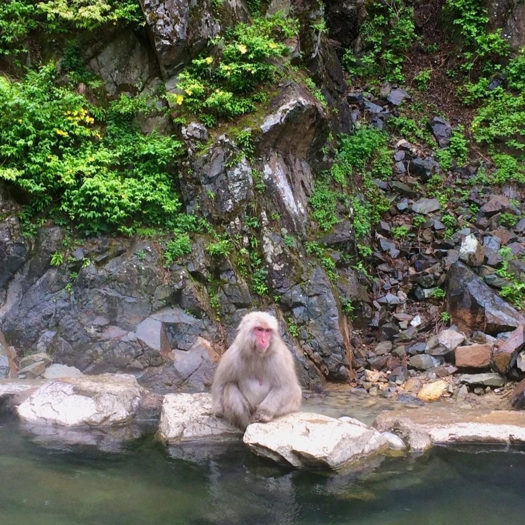 Snow Monkeys_180521_0202
