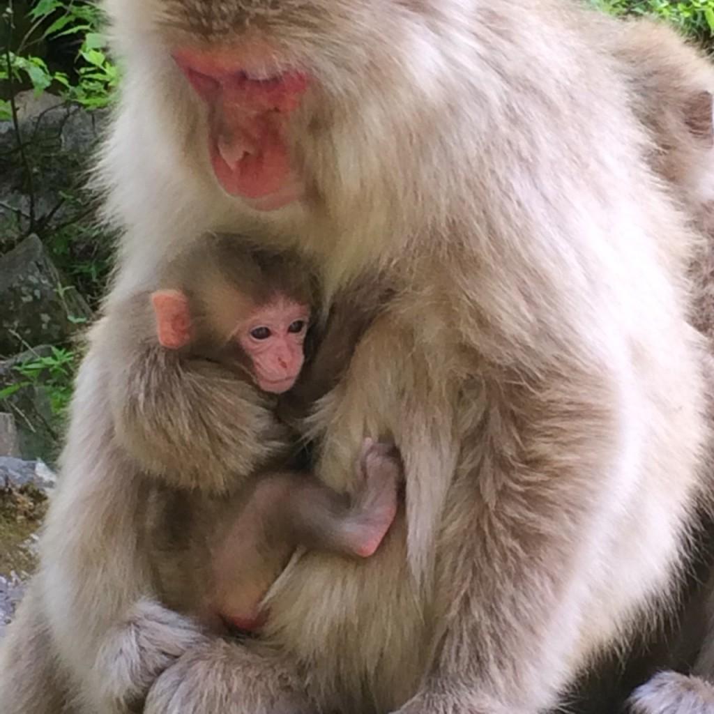 Snow Monkeys_180521_0228
