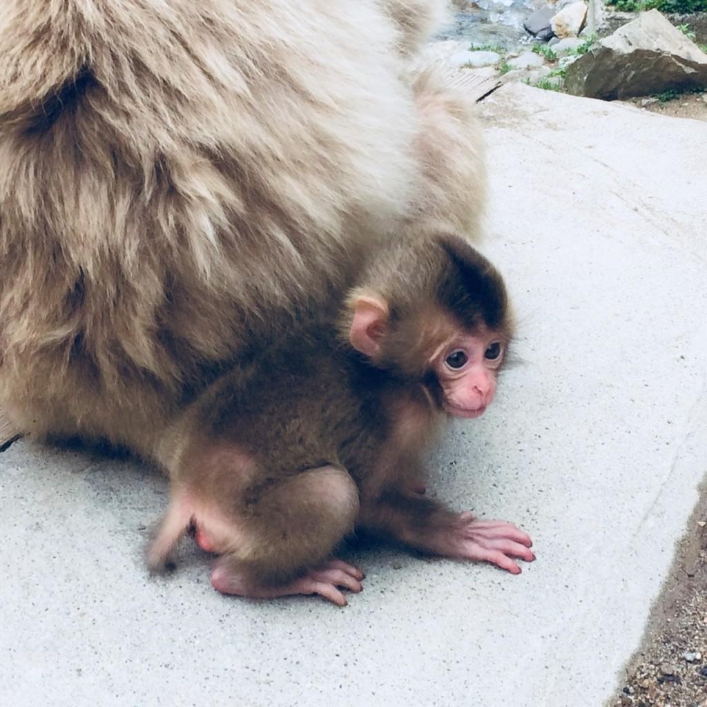 Snow Monkeys_180521_0230