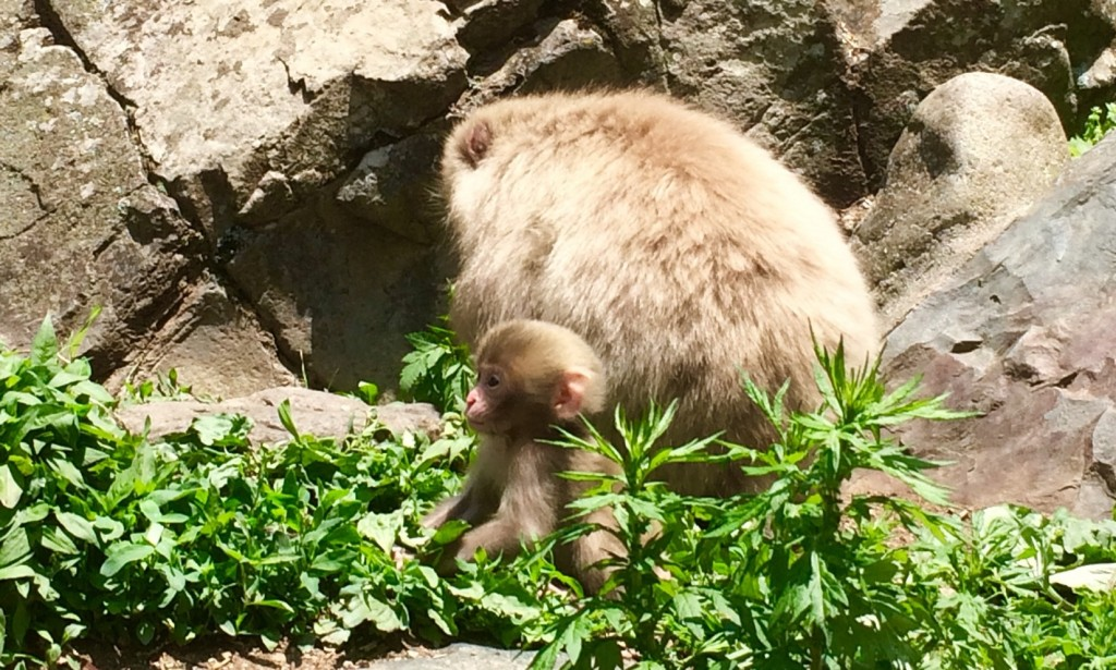 Snow Monkeys_180521_0234