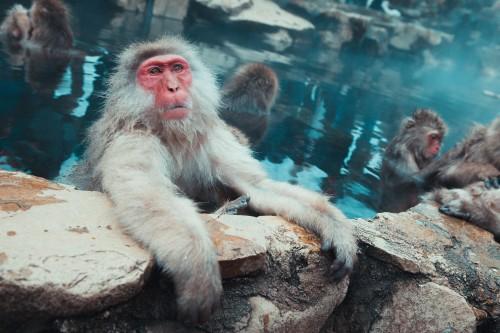 snow monkeys in bath