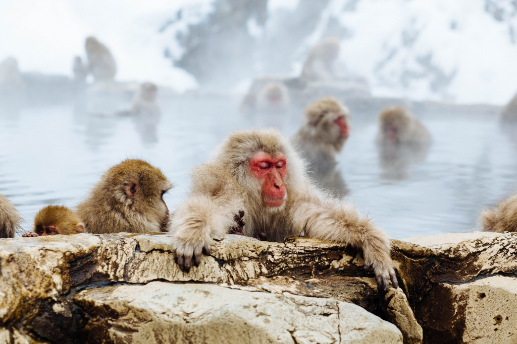 snow monkeys in bath snow