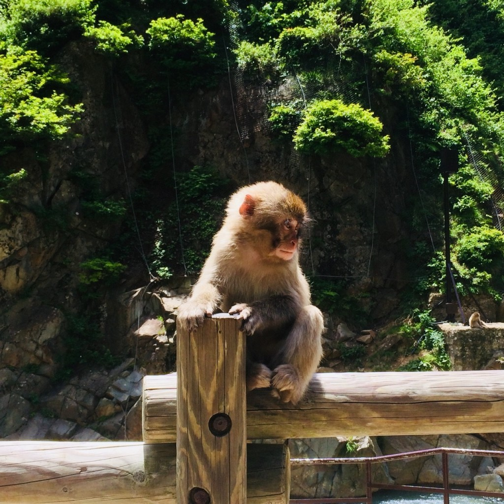 Snow Monkeys_180614_0236
