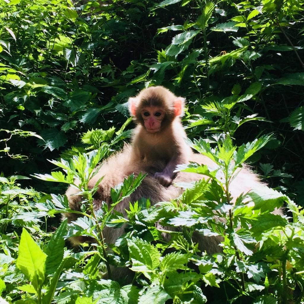 Snow Monkeys_180614_0245