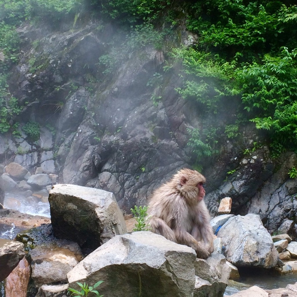 Snow Monkeys_180614_0259