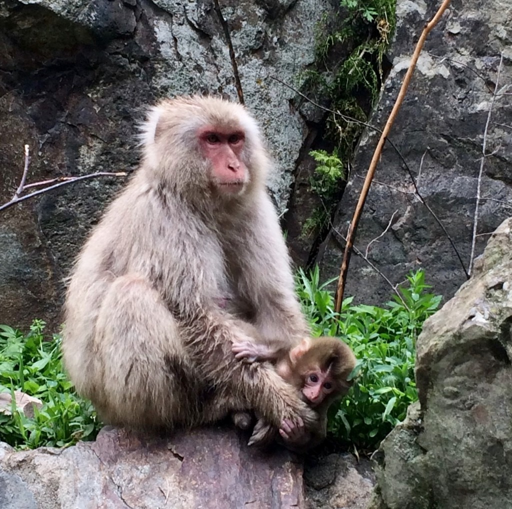 Snow Monkeys_180614_0262
