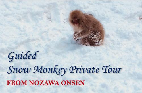 nqzawa private snow monkey tour