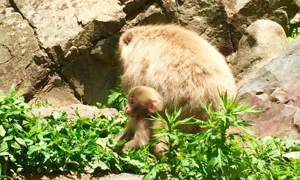 Snow-Monkeys_180521_0234-1024x615