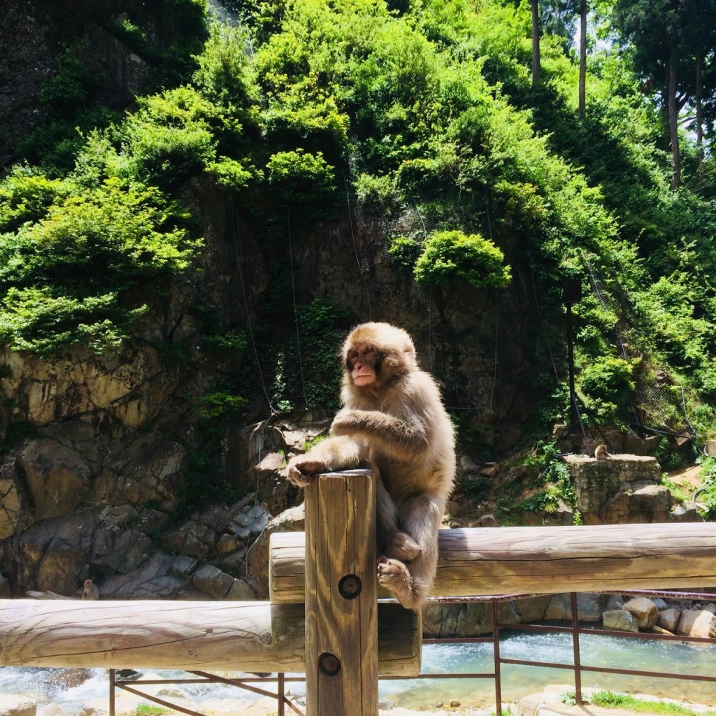 Snow Monkeys_180710_0235