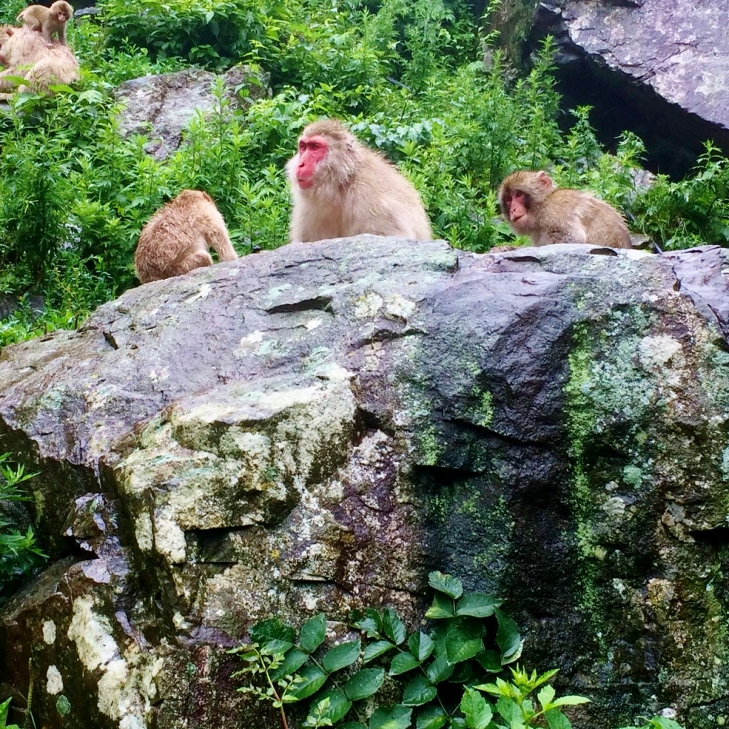 Snow Monkeys_180710_0293