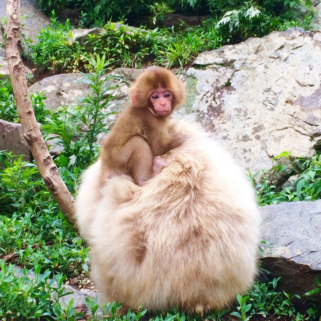 Snow Monkeys_180711_0284
