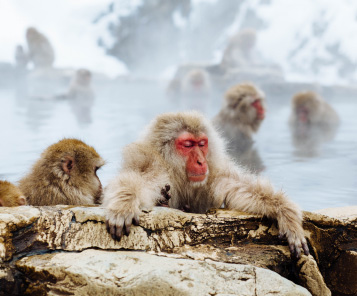 (EN) CHARTER TO/FROM SNOW MONKEY PARK