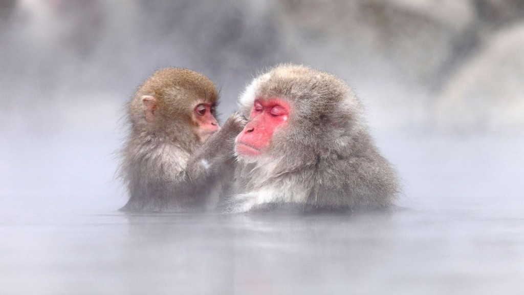 CN_snow_monkey_7_ml_141106_16x9_1600