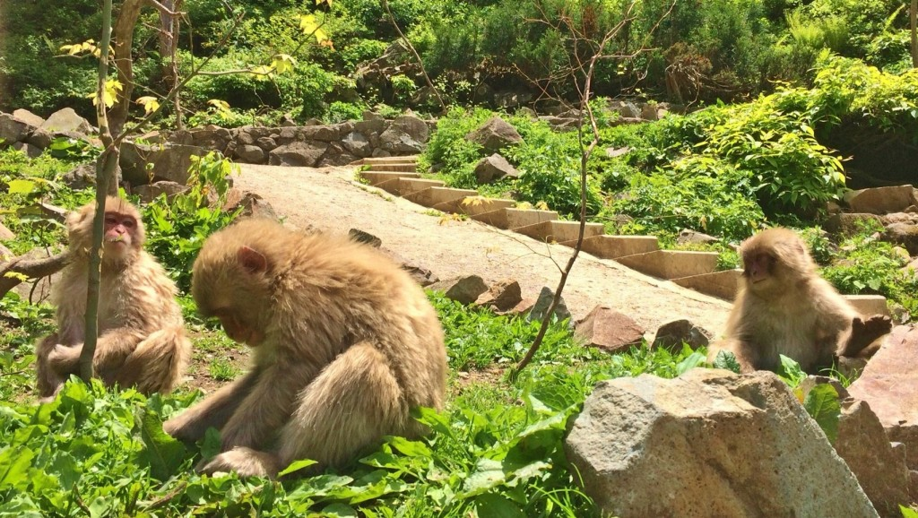 Snow Monkeys_180713_0224