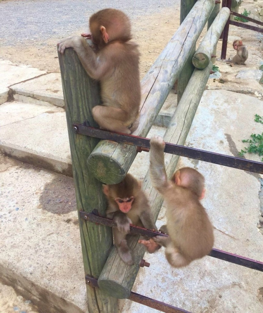 Snow Monkeys_180813_0304