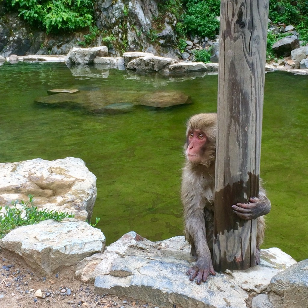 Snow Monkeys_180813_0311