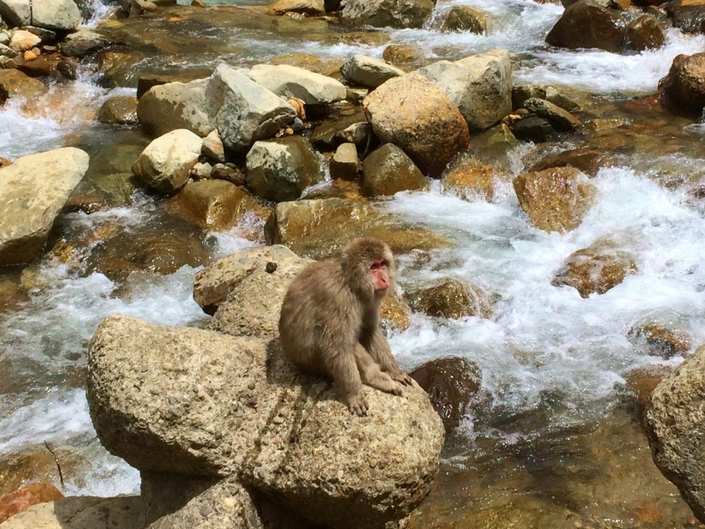 Snow Monkeys_180813_0319