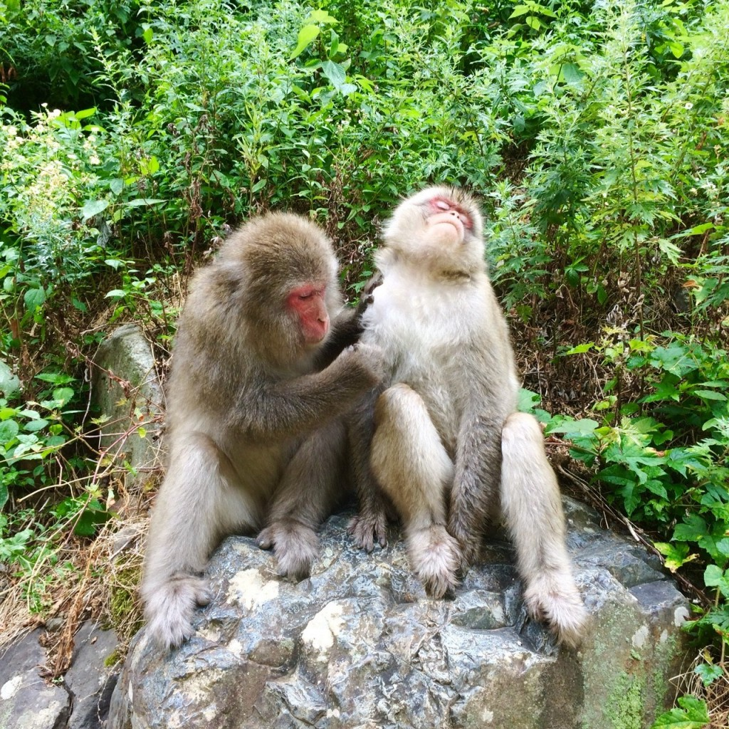 Snow Monkeys_180813_0320