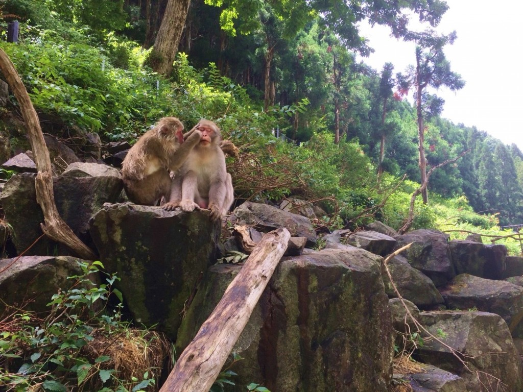 Snow Monkeys_180813_0327