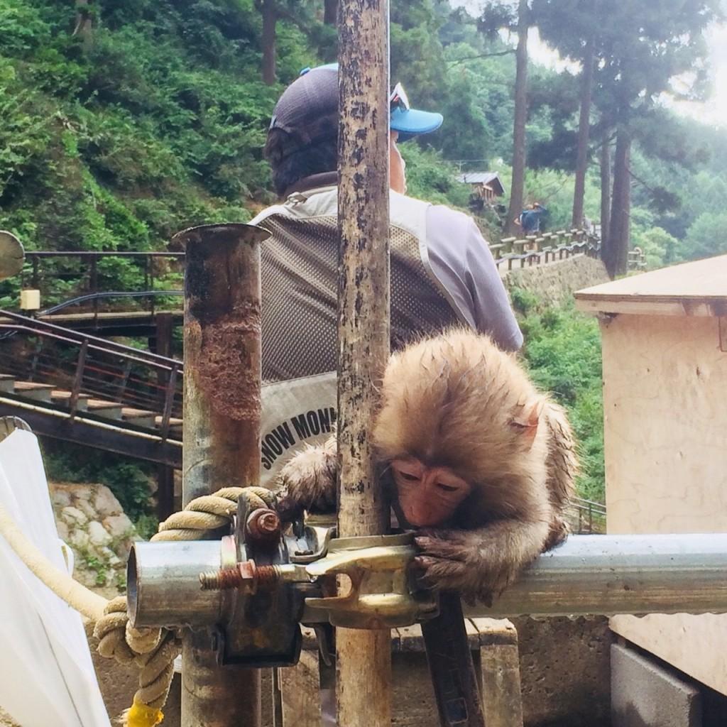Snow Monkeys_180813_0330