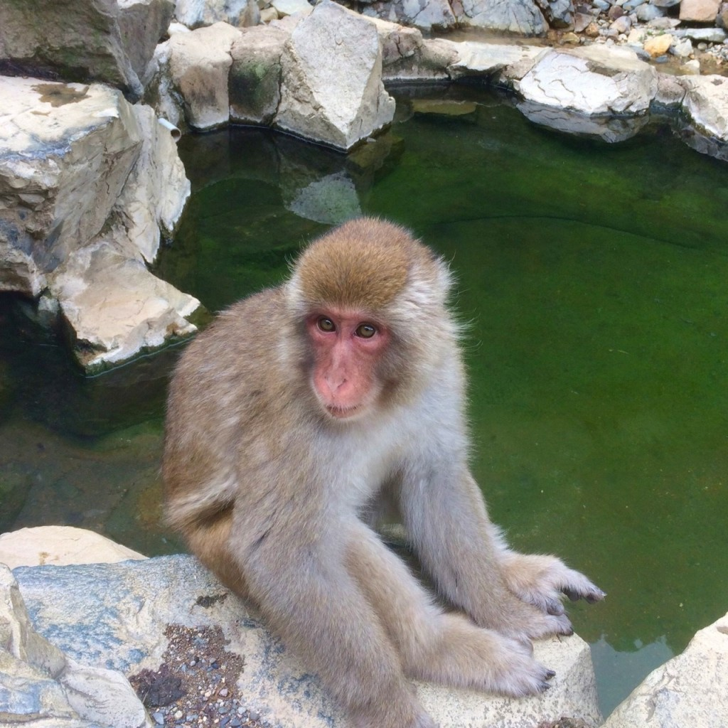 Snow Monkeys_180813_0333