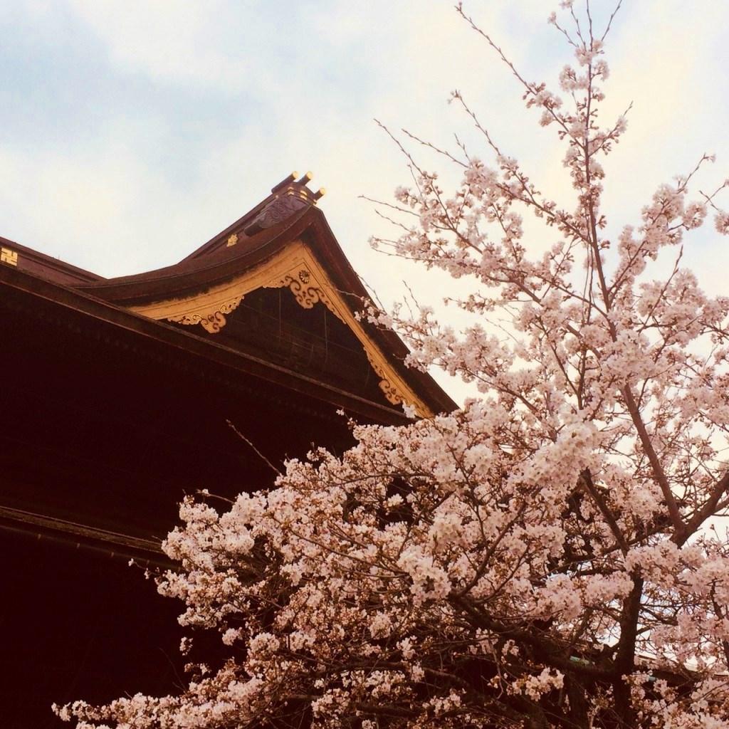 sakura-at-zenkoji-2-1024x1024