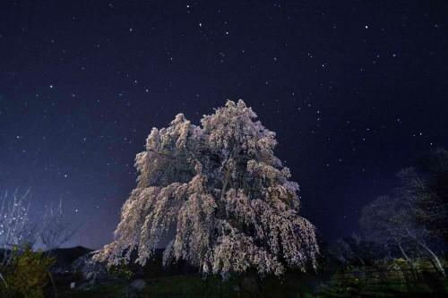 桜と星なごみ