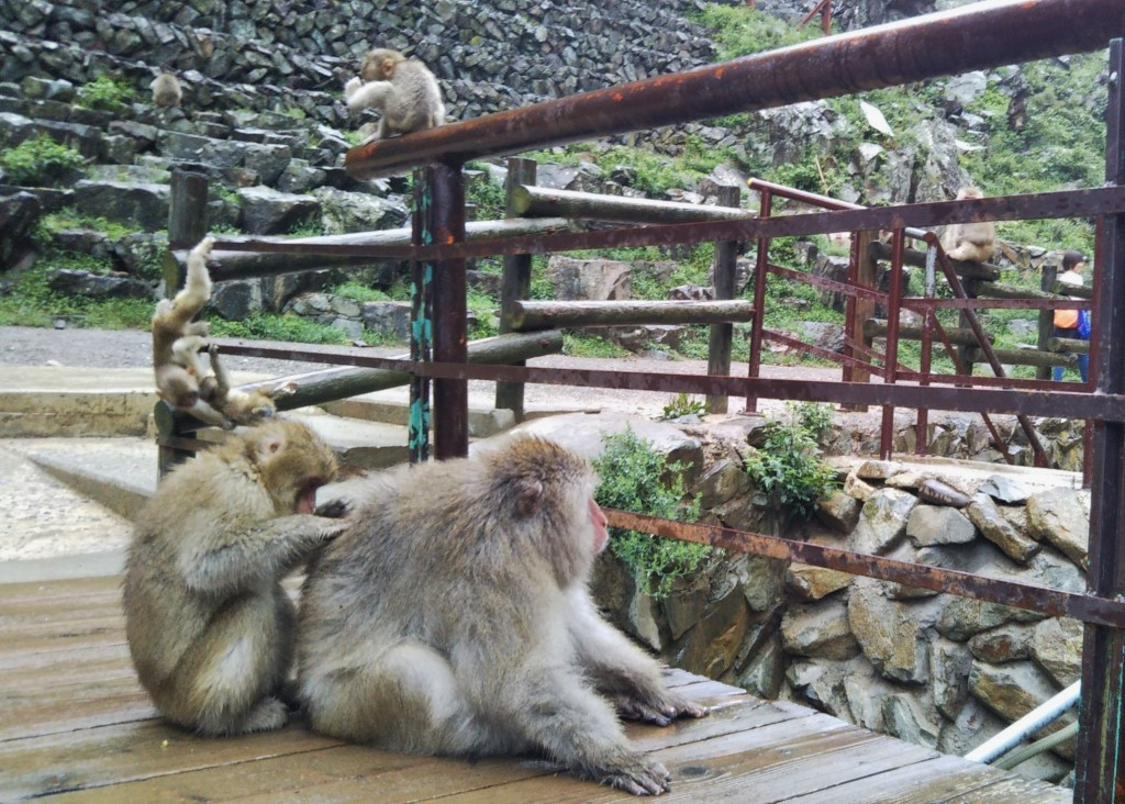 Snow Monkeys_180920_0355