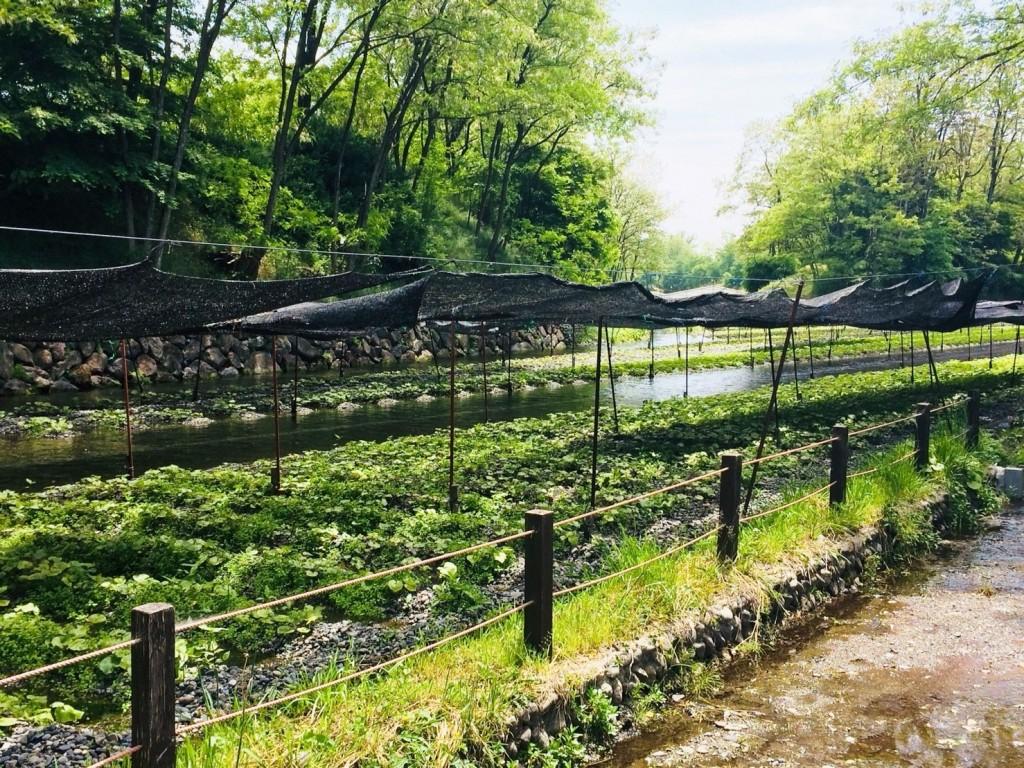 Matsumotodaio farm_181015_0032