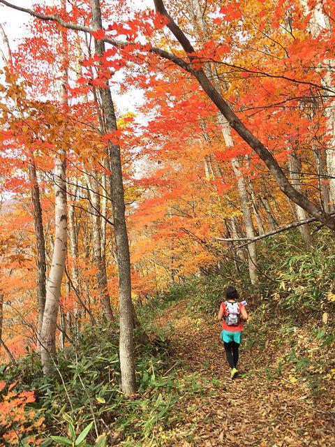 Shiga Kogen Autumn 7