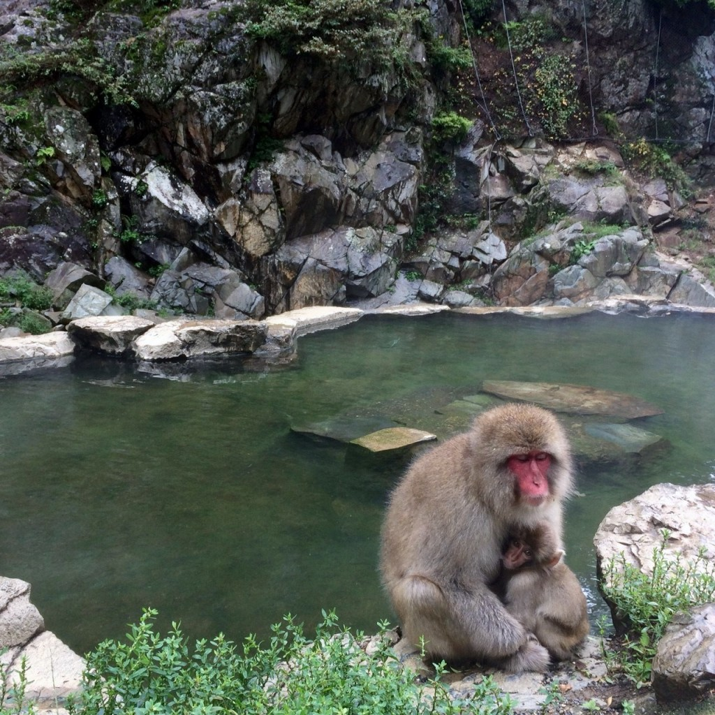 Snow Monkeys_181014_0358