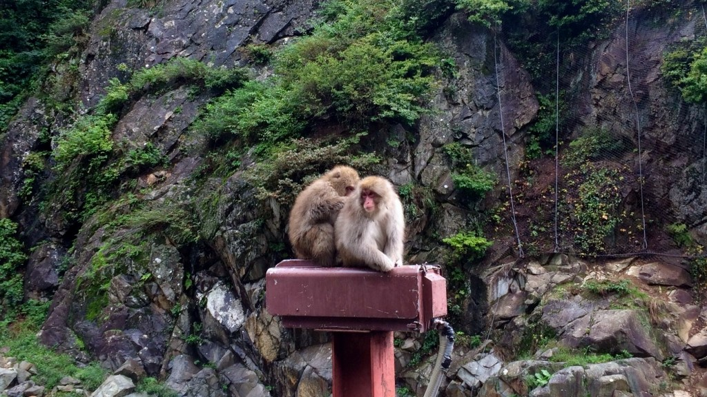 Snow Monkeys_181014_0361