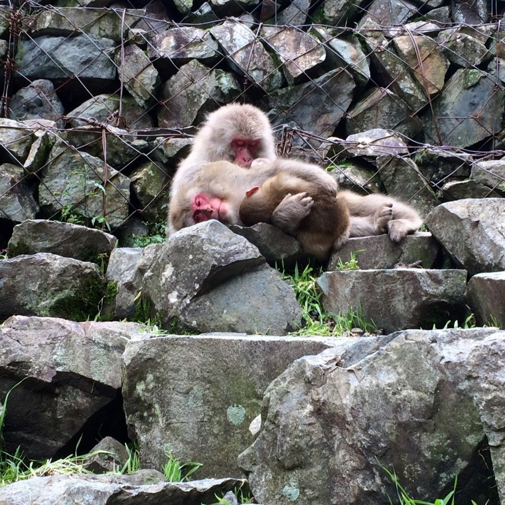 Snow Monkeys_181014_0362