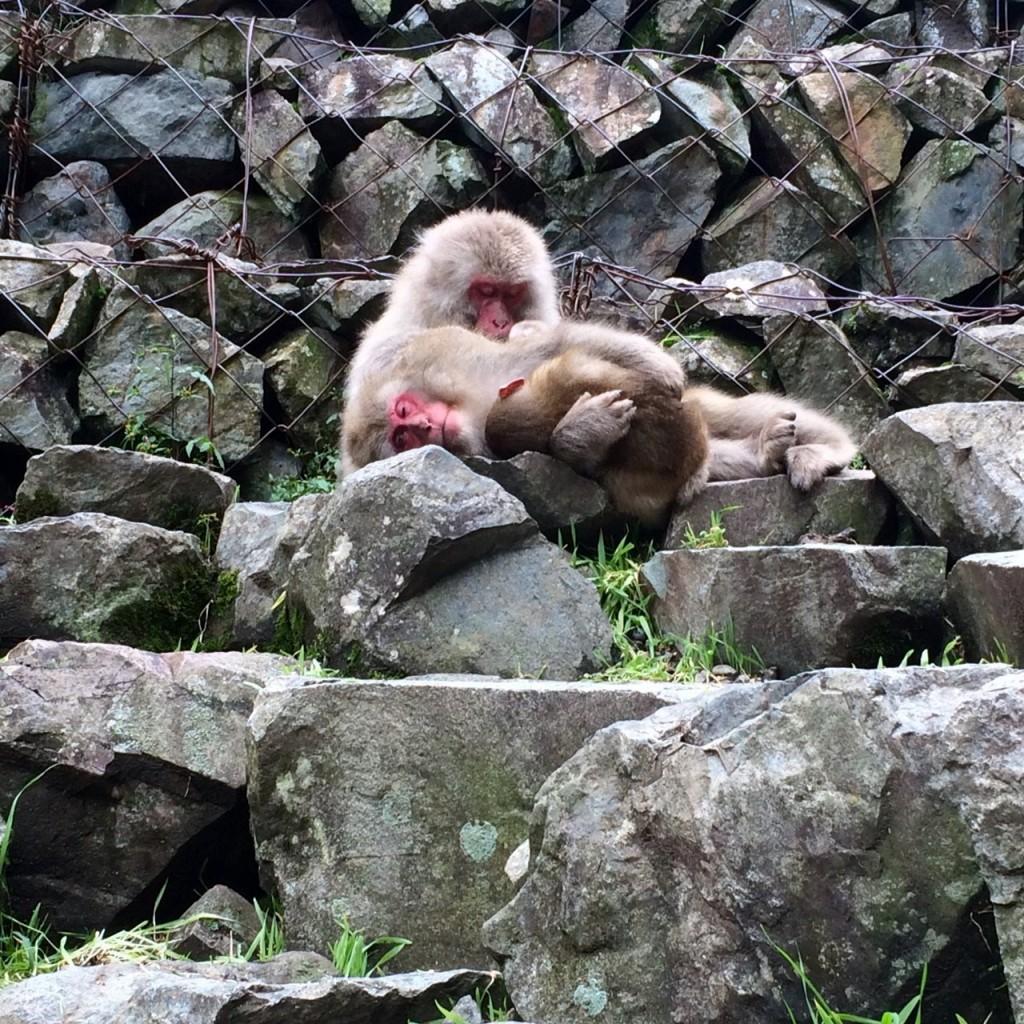 Snow Monkeys_181014_0362