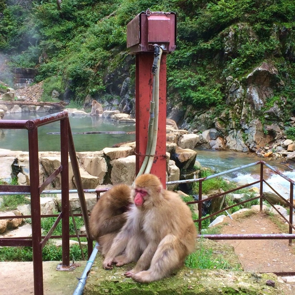 Snow Monkeys_181014_0363