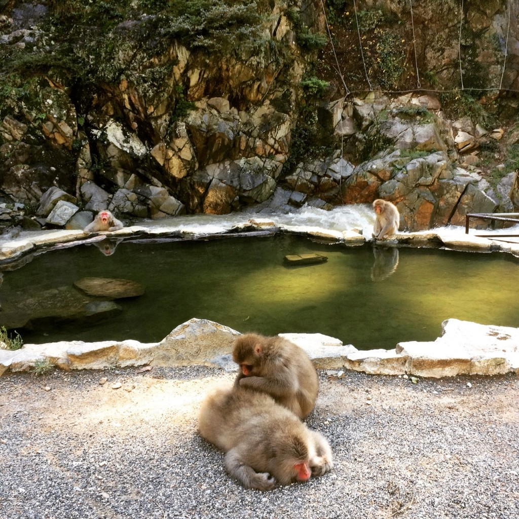 Snow Monkeys_181014_0364